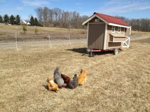 Owl Moon Farms Chickens