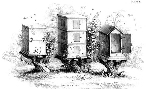 Beehives-Image-Graphics-Fairybw