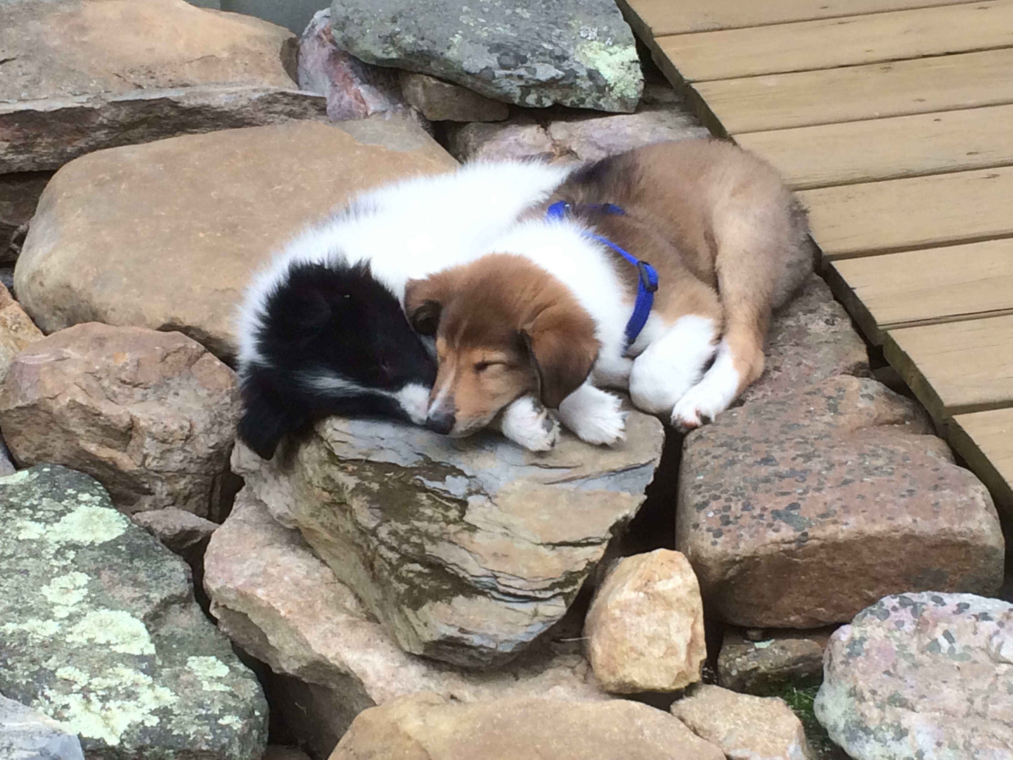 Two pups on one rock